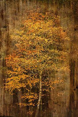 Golden Birch Poster by Liz  Alderdice