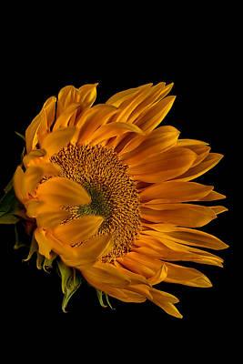Golden Blossom Poster by Rick Barnard