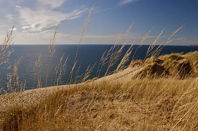 Golden Dune Grass On The Lake Poster