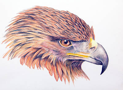 Golden Eagle Poster by Mary Mayes