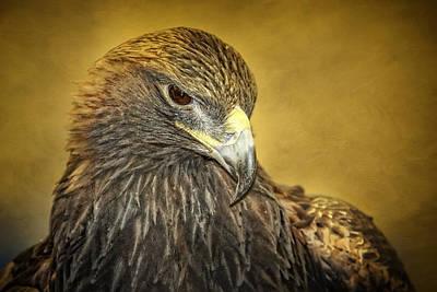 Golden Eagle Portrait Poster