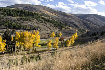 Golden Fall In Montana Poster