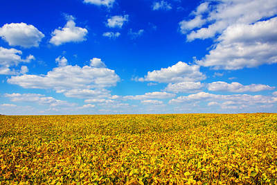 Golden Fields Under Puffy Clouds Poster by Bill Tiepelman