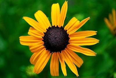 Poster featuring the photograph Golden Flower by Matt Harang