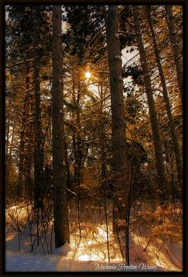 Poster featuring the photograph Golden Forrest by Michaela Preston