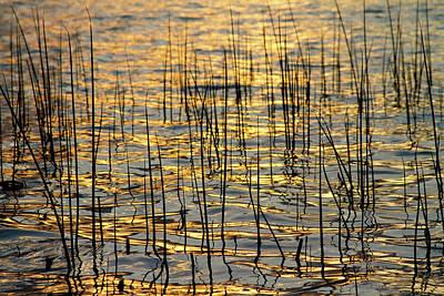 Golden Lake Ripples Poster