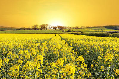Golden Landscape Poster by Boon Mee