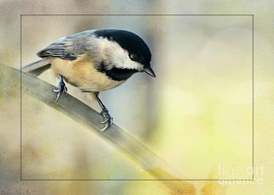 Golden Morning Chickadee Poster