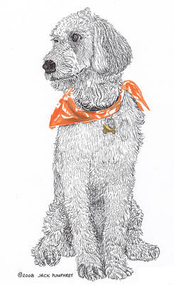 Golden Poodle Poster by Jack Pumphrey