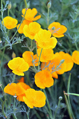 Golden Poppies Poster