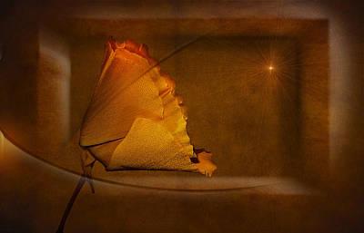 Golden Poppy Poster by Phil Clark