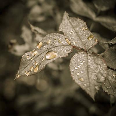 Golden Raindrops Poster by Carolyn Marshall