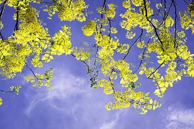 Golden Shower Poster by VistoOnce Photography