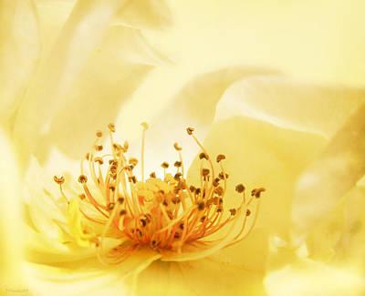 Golden Showers Rose Poster by Deborah Smith