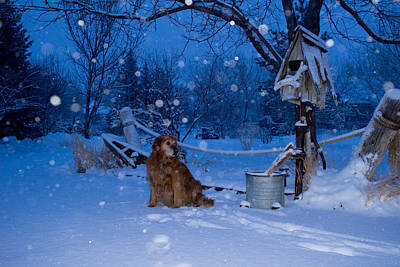 Golden Snow Globe - Golden Retriever - Casper Wyoming Poster
