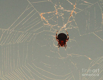 Poster featuring the photograph Golden Spider by Cheryl Del Toro