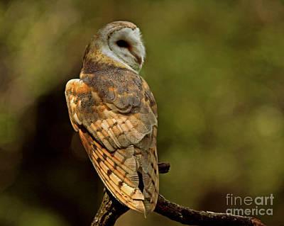 Golden Spirit At The Forest Edge - Barn Owl Poster