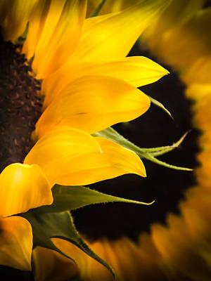 Golden Summers Poster by Karen Wiles