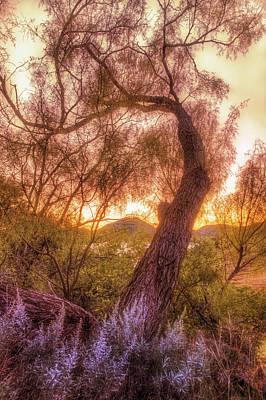 Golden Tree At The Quartz Mountains - Oklahoma Poster