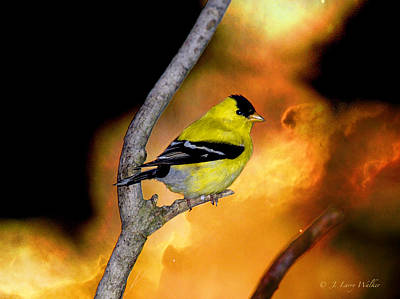 Goldfinch At The Edge Of The Abyss Poster by J Larry Walker