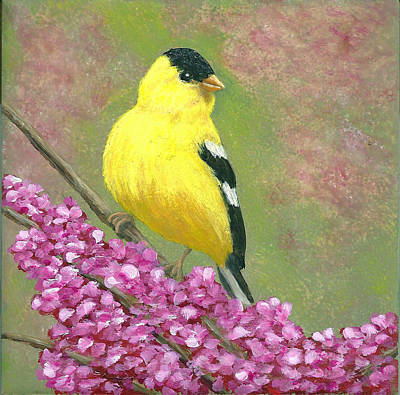 Goldfinch Spring Poster