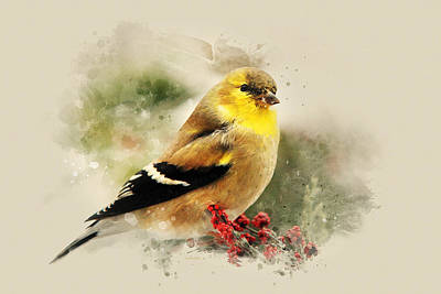 Goldfinch Watercolor Art Poster