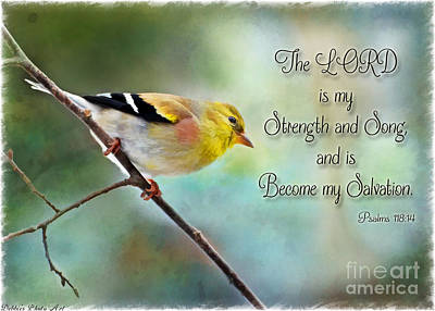 Goldfinch With Rosy Shoulder - Digital Paint And Verse Poster