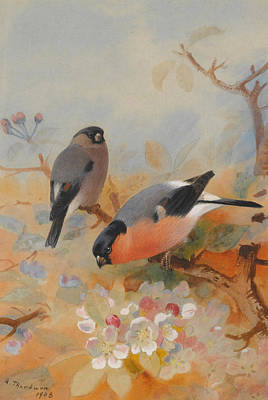 Goldfinches Bullfinches Poster by Archibald Thorburn