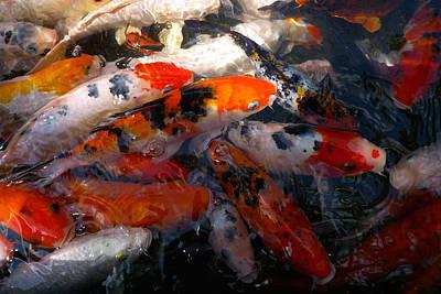 Goldfish Shimmer Poster