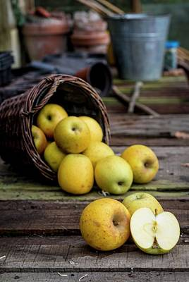 Goldrush Apples Falling From A Basket Poster
