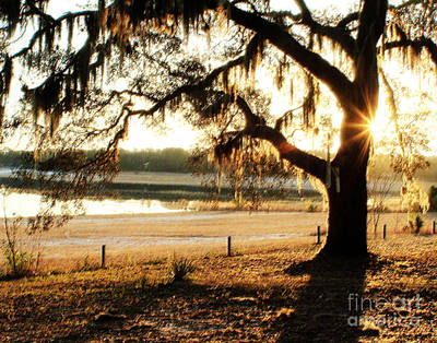 Good Morning Mossy Oak Poster