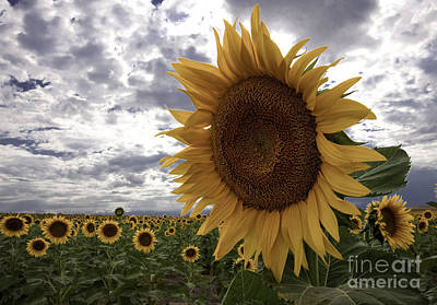 Poster featuring the photograph Good Morning Sunshine by Kristal Kraft
