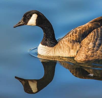 Goose Symmetry Poster by Bill Tiepelman