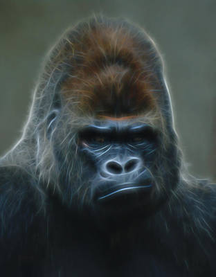 Gorilla Digital Art Poster by Ernie Echols