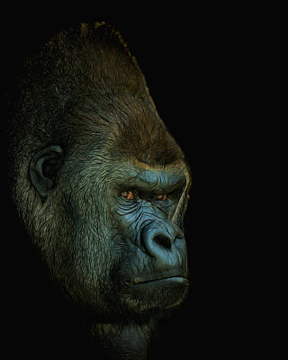 Gorilla Portrait Digital Art Poster by Ernie Echols