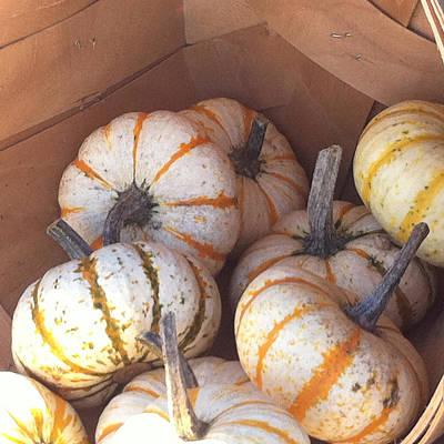 Gourd Harvest Poster by Denyse Duhaime