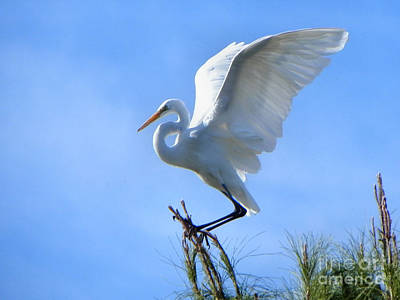 Poster featuring the photograph Graceful Landing by Deb Halloran