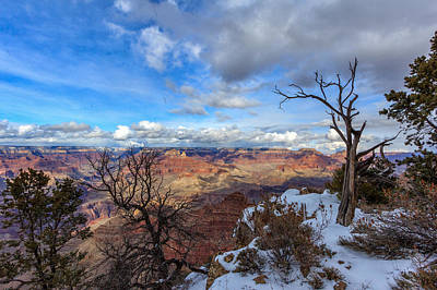 Grand Canyon And Dead Tree Poster by Melanie Harman