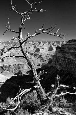 Grand Canyon Bw Poster