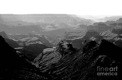 Grand Canyon Soaring Bird Of Prey Conte Crayon Black And White Poster by Shawn O'Brien