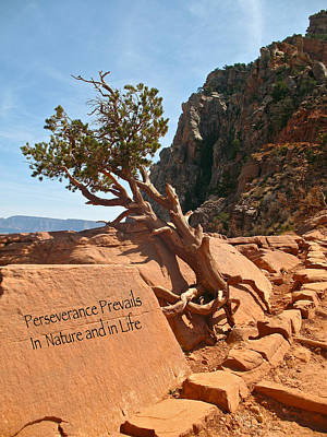 Poster featuring the photograph Grand Canyon Survivor by Kathleen Scanlan