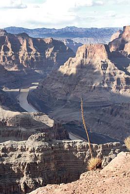 Grand Canyon Poster by Yosi Cupano