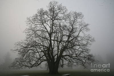Grand Oak Tree Poster by Rich Collins