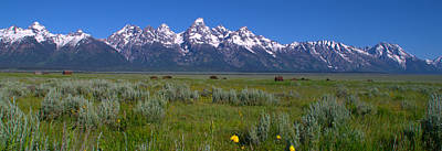 Grand Teton Bison Poster by Brian Harig