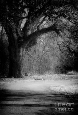Grand Tree Poster