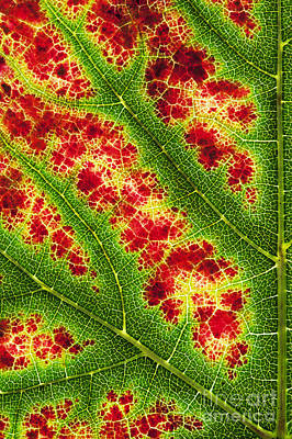 Grape Leaf Pattern Poster
