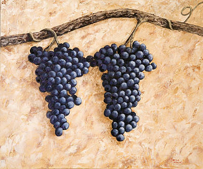 Grape Vine Poster by Darice Machel McGuire