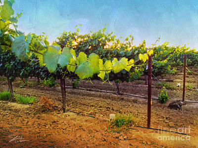 Grape Vine In The Vineyard Poster by Shari Warren