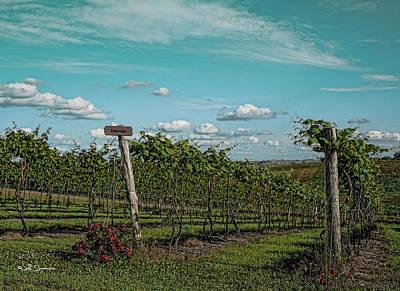 Grape Vines Poster by Jeff Swanson
