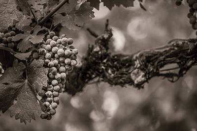 Grapes In Grey 1 Poster